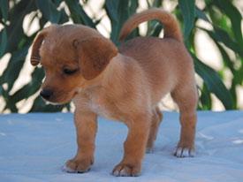 Resultado de imagen para cachorro sin raza